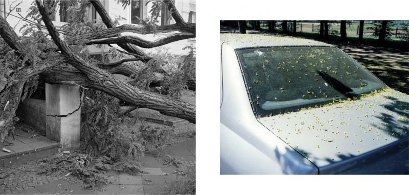 Gerhard Kurtz, Daniel Sadrowski, Bäume um uns